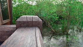 Зеленый цвет дерева предпосылки, древесина Стоковые Фото