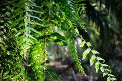 Зеленый цвет леса в Таиланде Стоковая Фотография