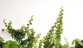 Зеленый цвет завода нерезкости на белой предпосылке пола Стоковое фото RF