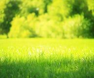 зеленый цвет запачканный предпосылкой Стоковая Фотография RF