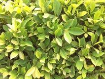 зеленый цвет изолировал листья белые стоковая фотография