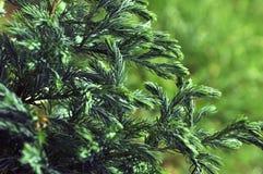 Зеленый цвет искусства Стоковое Изображение