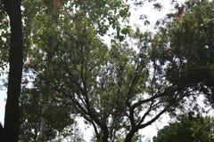 Зеленый цвет лист с солнечным светом в парке Стоковое Изображение