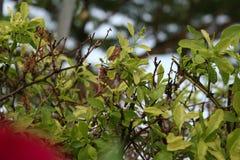 Зеленый цвет лист с солнечным светом в парке Стоковое фото RF