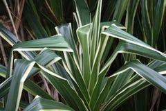 Зеленый цвет лист с солнечным светом в саде Стоковые Изображения