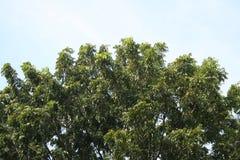 Зеленый цвет лист с солнечным светом в саде Стоковое Изображение