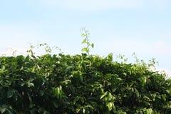 Зеленый цвет лист с солнечным светом над голубым небом в парке Стоковая Фотография RF