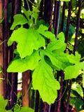 Зеленый цвет лист стоковые фотографии rf