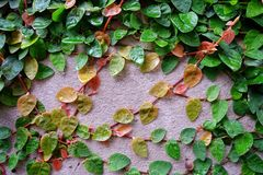 Зеленый цвет лист Wallleaves Стоковое фото RF