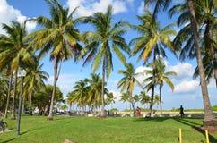 Зеленый цвет и ладони Miami Beach Стоковая Фотография