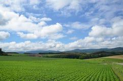 Зеленый цвет и синь Стоковое Фото