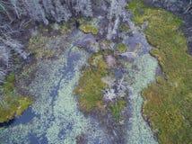 Зеленый цвет и синь Стоковая Фотография