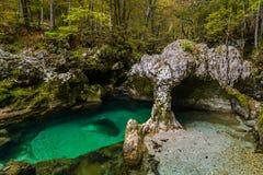 Зеленый цвет и чистая вода на стоковые изображения rf