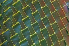 зеленый цвет кокоса выходит текстура сплетено Стоковые Фотографии RF