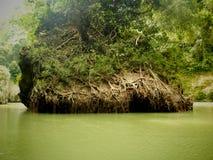 Зеленый цвет корня Стоковое Изображение RF