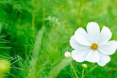 Зеленый цвет красив Стоковые Фото