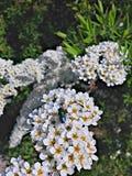 зеленый цвет мухы Стоковая Фотография