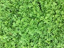 Зеленый цвет мха шипа в солнце Стоковое Изображение