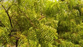 Зеленый цвет настолько свежий стоковая фотография