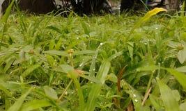 Зеленый цвет на зеленом цвете Стоковое Фото