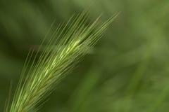 Зеленый цвет на зеленом цвете Стоковое фото RF