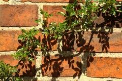 Зеленый цвет на стене Стоковое Изображение RF