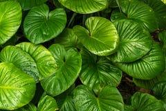 зеленый цвет падений выходит вода Стоковое Фото