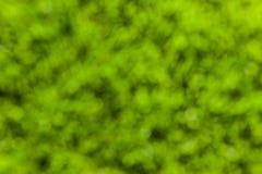 зеленый цвет полета птиц предпосылки осени выходит лучам поворот солнца Стоковое Фото