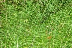 Зеленый цвет полет предпосылку Стоковая Фотография RF