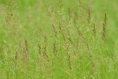 зеленый цвет поля травянистый Стоковое Изображение RF