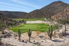 Зеленый цвет поля для гольфа пустыни Стоковая Фотография RF