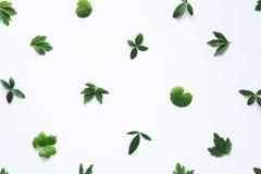 зеленый цвет предпосылки выходит белизна стоковые фотографии rf