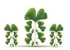 зеленый цвет предпосылки выходит вал макроса Стоковые Изображения RF