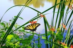 зеленый цвет предпосылки выходит лето природы клена влажным Стоковые Изображения