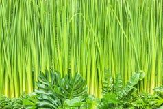 зеленый цвет предпосылки выходит стена Стоковые Фотографии RF