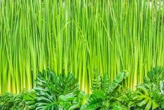 зеленый цвет предпосылки выходит стена Стоковое Изображение
