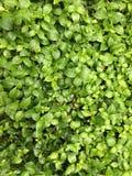 зеленый цвет предпосылки свежий Стоковая Фотография RF