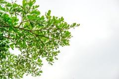 зеленый цвет принципиальной схемы предпосылки относящий к окружающей среде выходит небо Стоковая Фотография RF