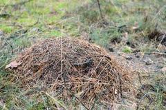 зеленый цвет пущи листва anthill Стоковое Изображение