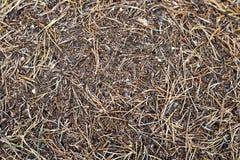 зеленый цвет пущи листва anthill Стоковое Изображение RF