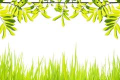 Зеленый цвет рамки Стоковое Фото