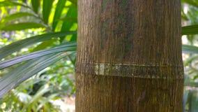 Зеленый цвет древесины Стоковое фото RF