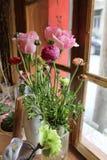 Зеленый цвет розы пинка Стоковые Фотографии RF