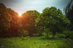 зеленый цвет сада Стоковые Фото