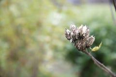 зеленый цвет сада Стоковые Фотографии RF