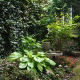 зеленый цвет сада Стоковое фото RF
