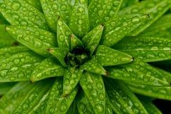 зеленый цвет сада Стоковое Фото