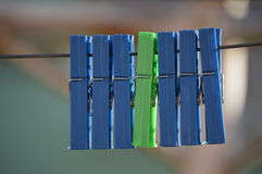 Зеленый цвет среди сини Стоковые Изображения