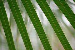 Зеленый цвет стены выходит предпосылка с космосом текста Стоковое фото RF