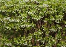 Зеленый цвет стены выходит предпосылка Стоковые Фото